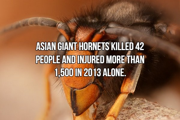 Facts About Dangerous Animal