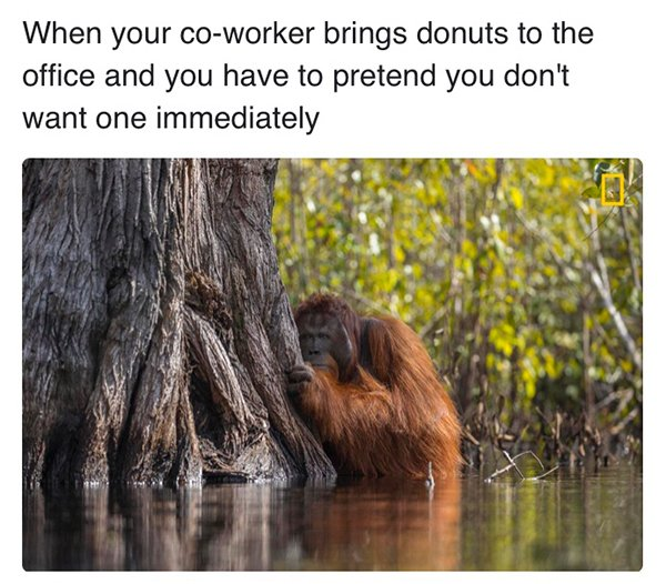 Memes About Work