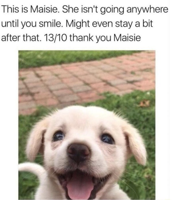 Wholesome Meme That Will Make You Feel Better